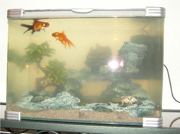 Filtre pour aqua contenant des poissons salissants Aqua210