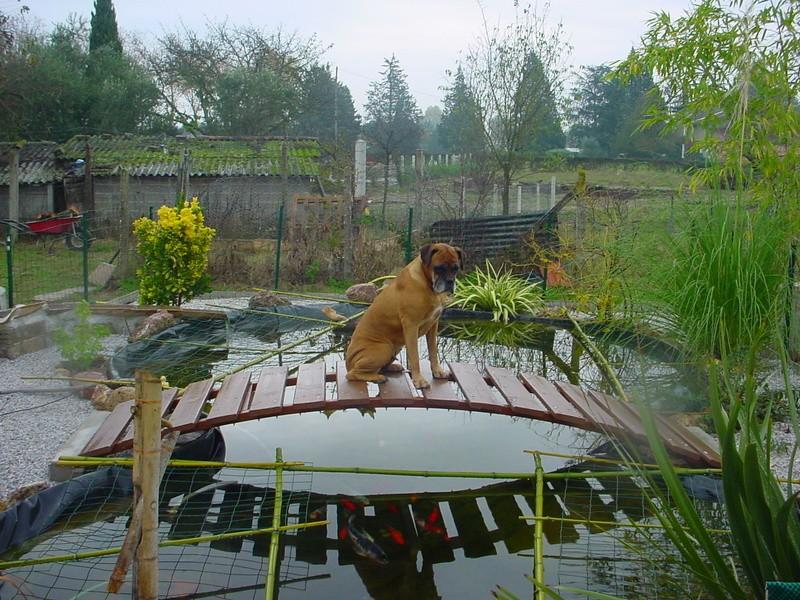 Votre photo pour decembre 2008 Bassin16