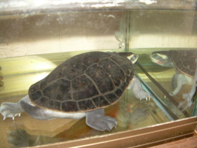 bassin d'intérieur pour tortues Dscn1810
