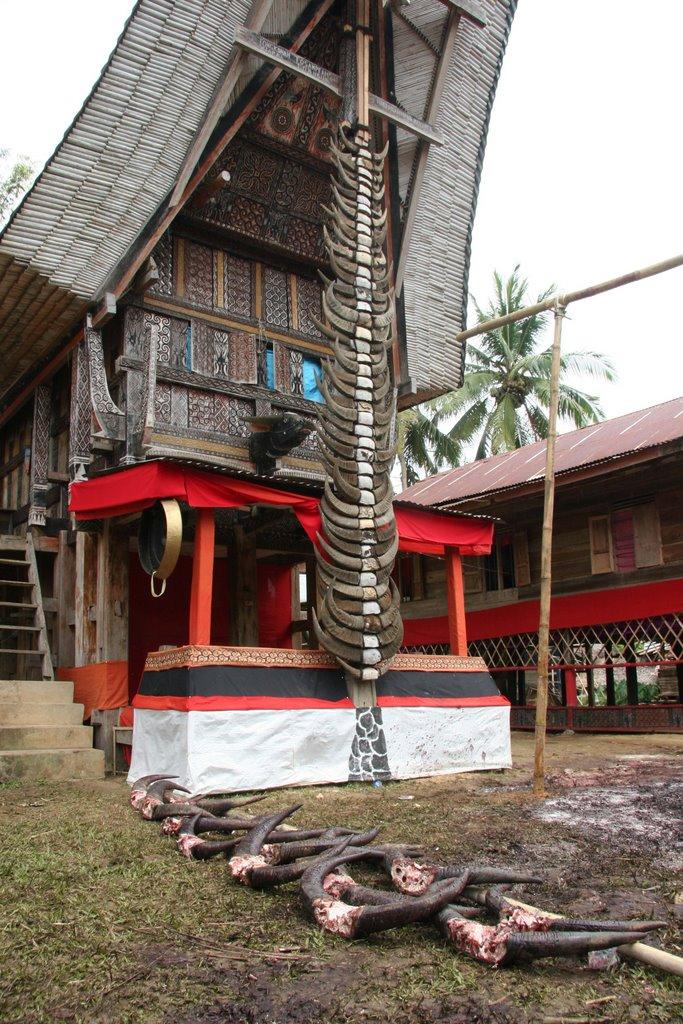 [Indonésie] - Les Torajas (Kabupaten de Tana Toraja), groupe ethnique indigène 13334710