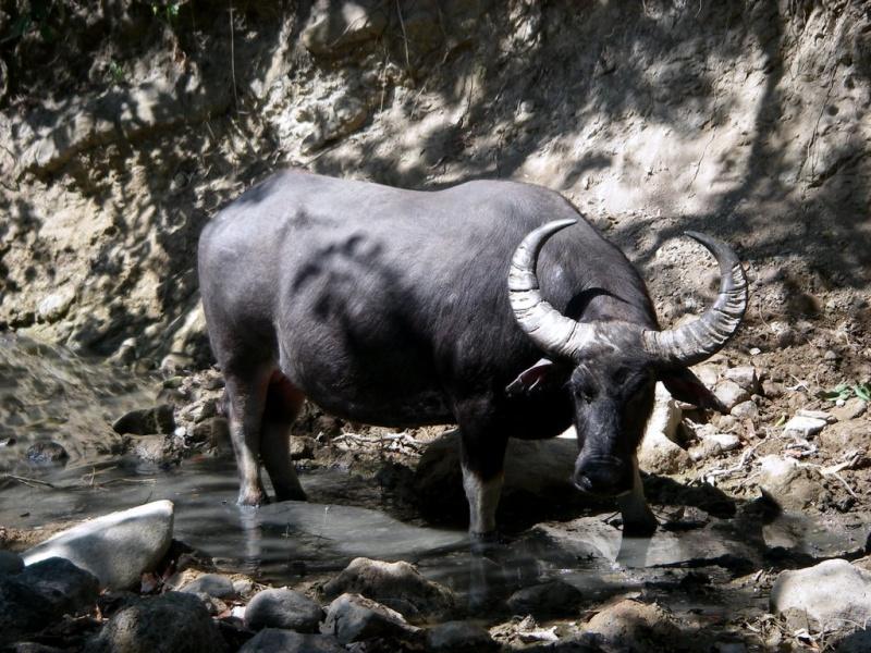 [Indonésie] -île de Rinca National Park 15468810