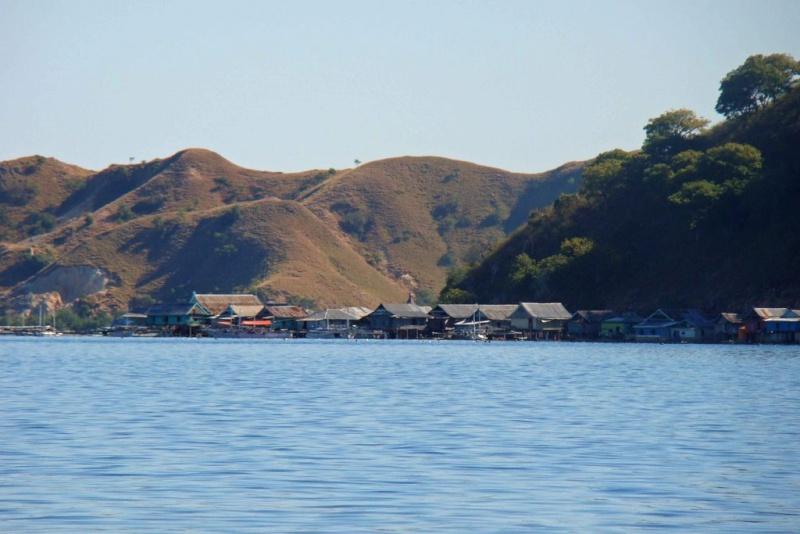 [Indonésie] -île de Rinca National Park 24693210