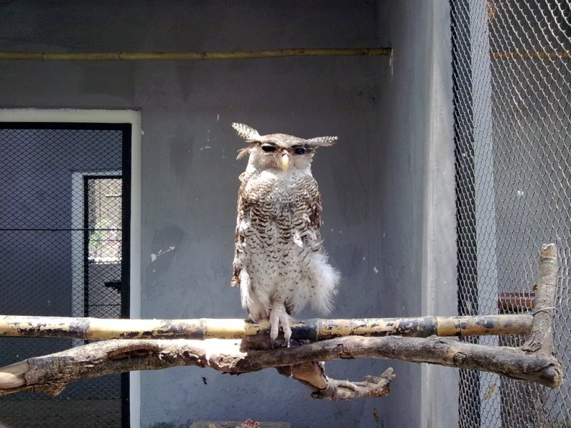 [Indonésie] - Zoo de Surabaya 27087810
