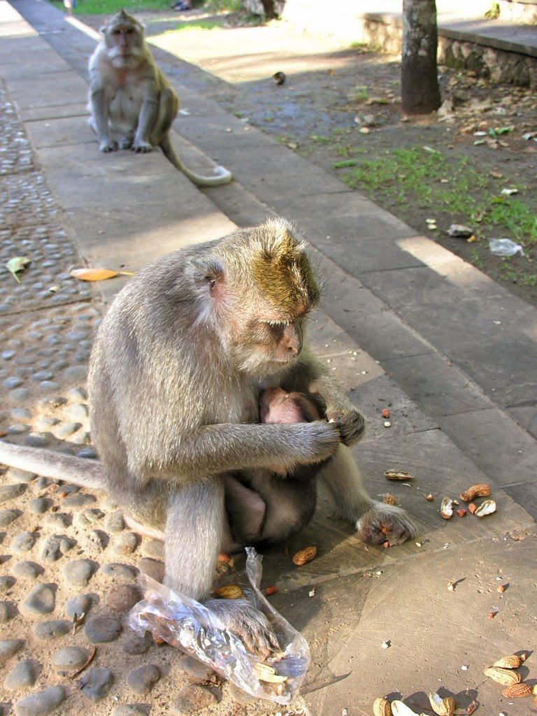 [Indonésie] - Temple Uluwatu  33971210