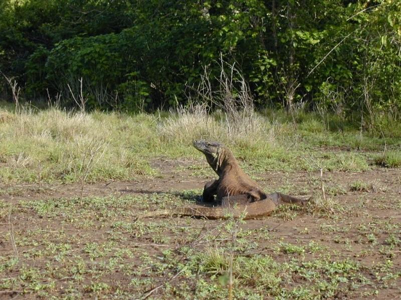 [Indonésie] - Parc National de Komodo 46740610