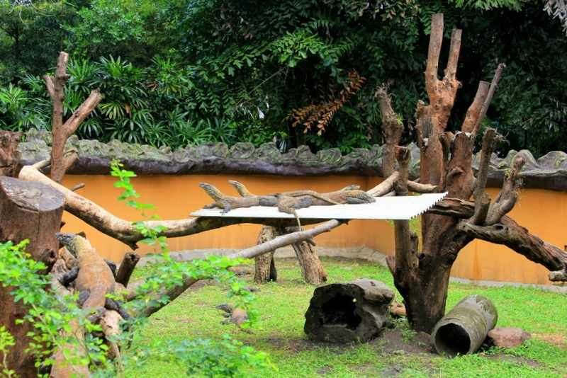 [Indonésie] - Zoo de Surabaya 50774910