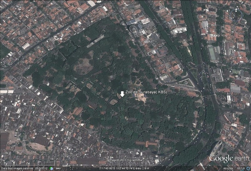 [Indonésie] - Zoo de Surabaya Zoo_kb10