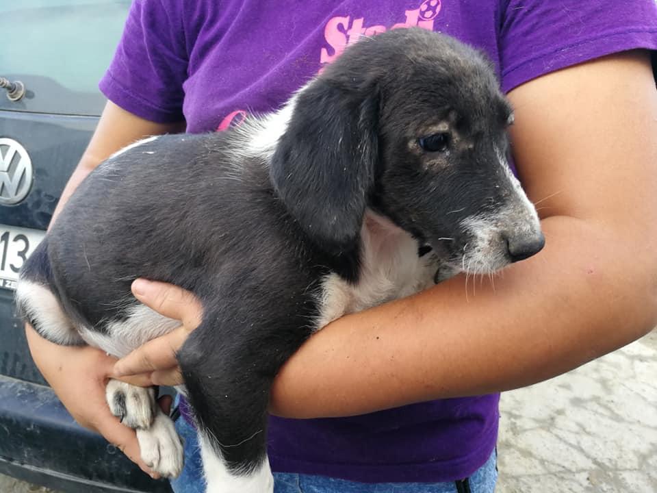ELVIRE (ex PALOMA) - femelle croisée de taille moyenne, née en avril 2018. (BUCAREST) - CHEZ ALINA & ANDA - Adoptée par par Martine (depart28) 37394711