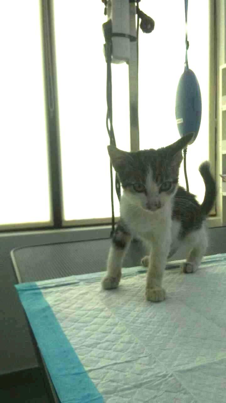 RAINBOW - très joli chat mâle, très joueur, né en juin 2018 - ADOPTE EN ROUMANIE 41539610