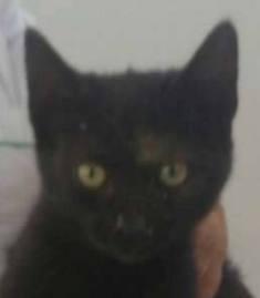 MAZOUT - très joli chat mâle, très joueur, né en juin 2018 - ADOPTE EN ROUMANIE 41641411
