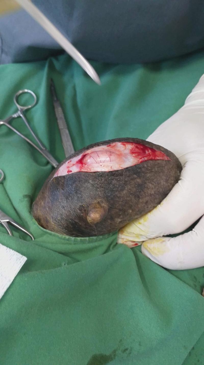 URGENCE BISCOTTE - femelle croisée de petite taille, née en 2003. - (Pascani) REMEMBER ME - DECEDEE 42168910