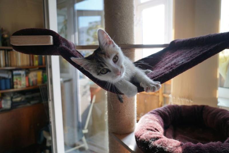 MIAA - magnifique chat femelle, née en juin 2018 (BUCAREST) - CHEZ CARMINA - ADOPTE EN ROUMANIE 42782711