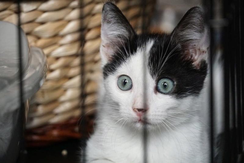 OMII - magnifique chat mâle, né en juin 2018 (BUCAREST) - CHEZ CARMINA - réservé par une autre association 42792810