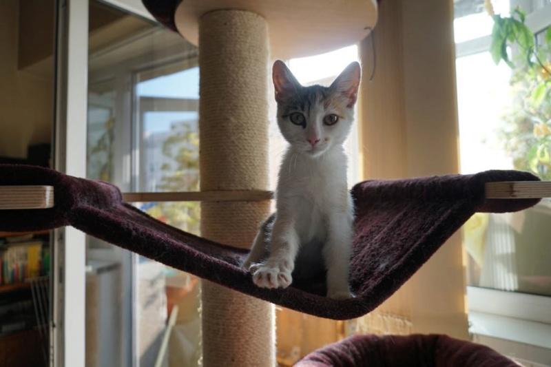MIAA - magnifique chat femelle, née en juin 2018 (BUCAREST) - CHEZ CARMINA - ADOPTE EN ROUMANIE 42797510