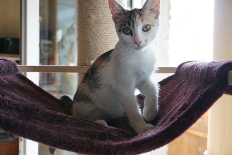 MIAA - magnifique chat femelle, née en juin 2018 (BUCAREST) - CHEZ CARMINA - ADOPTE EN ROUMANIE 42799910