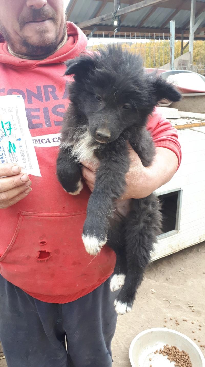 URUGUAY - mâle croisé de taille moyenne adulte, né environ en juillet 2018 (PASCANI) - REMEMBER ME LAND - Adopté par Lionel et Laetitia (67) 43573211