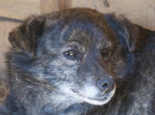 MIGNONNE - femelle, croisée, née environ août 2012, de petite taille - REMEMBER ME LAND - En FA chez Armelle (94) Mignon10