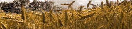 Les champs - Cultures et élevages