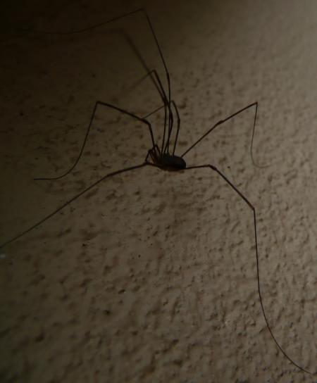 spider from mars Octobr15