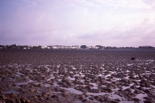 [Campagne] DJIBOUTI - TOME 1 - Page 20 Img13410