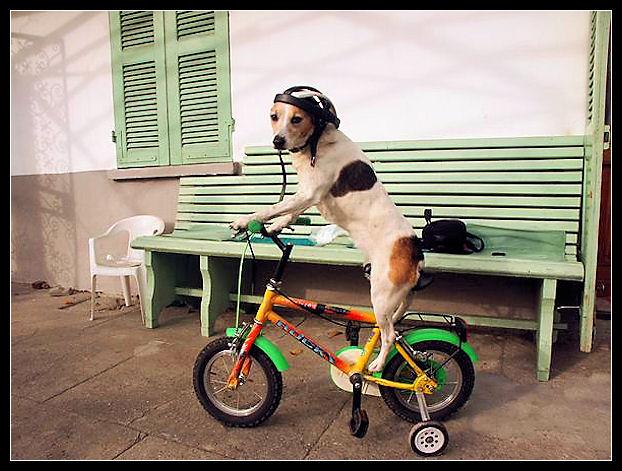 Bike Fun point - Pagina 3 Untitl44