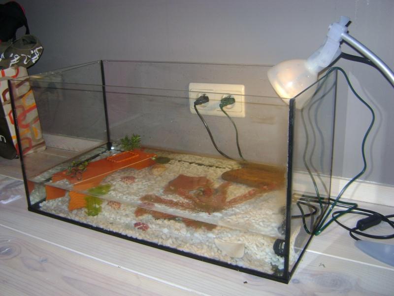 Voilà, juste mon aquarium à moi Dsc00411