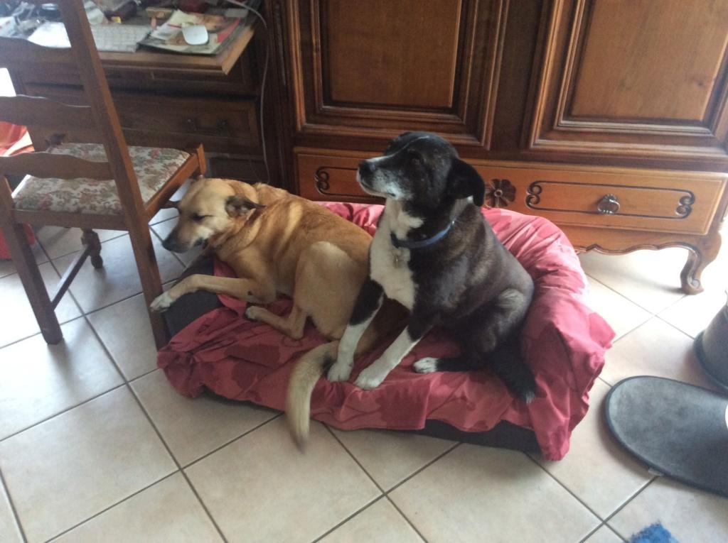 Tzupy, chien de notre quartier, mâle très sociable, né en 2009. - Page 4 0909d710