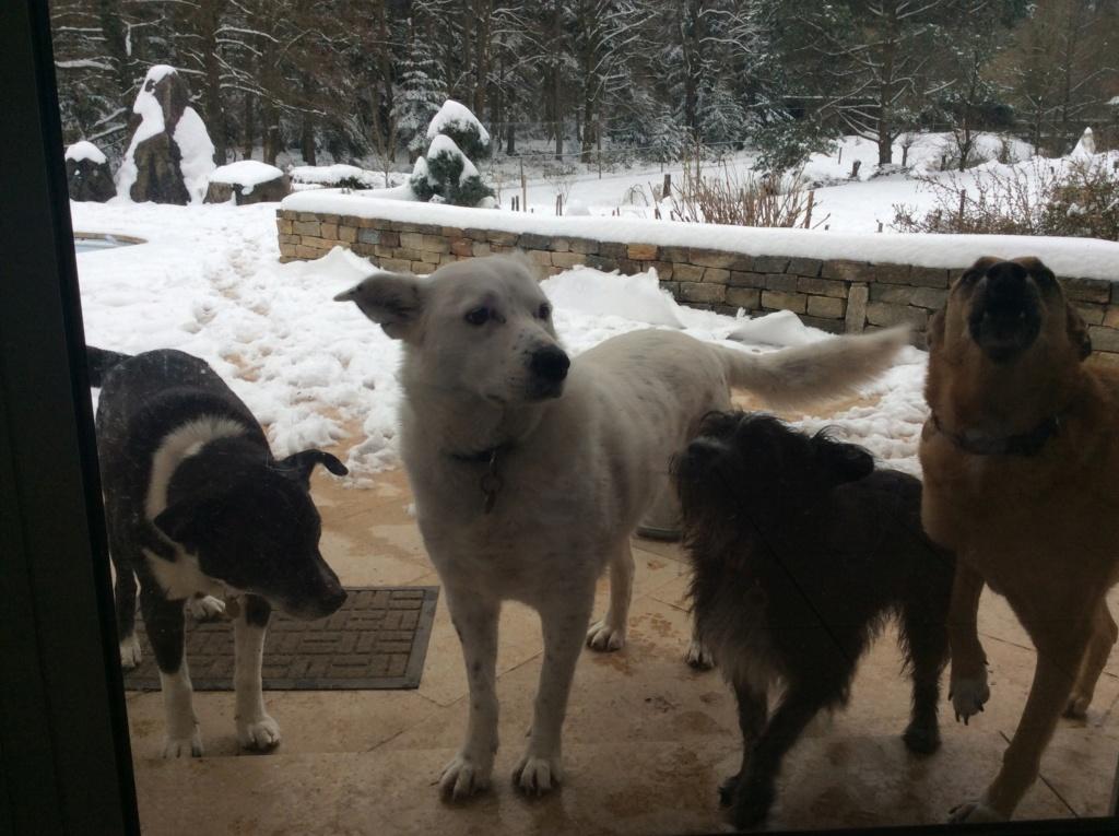 Tzupy, chien de notre quartier, mâle très sociable, né en 2009. - Page 4 A3b0cb10