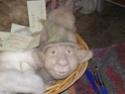 des trolls en feutrine... Pb090210