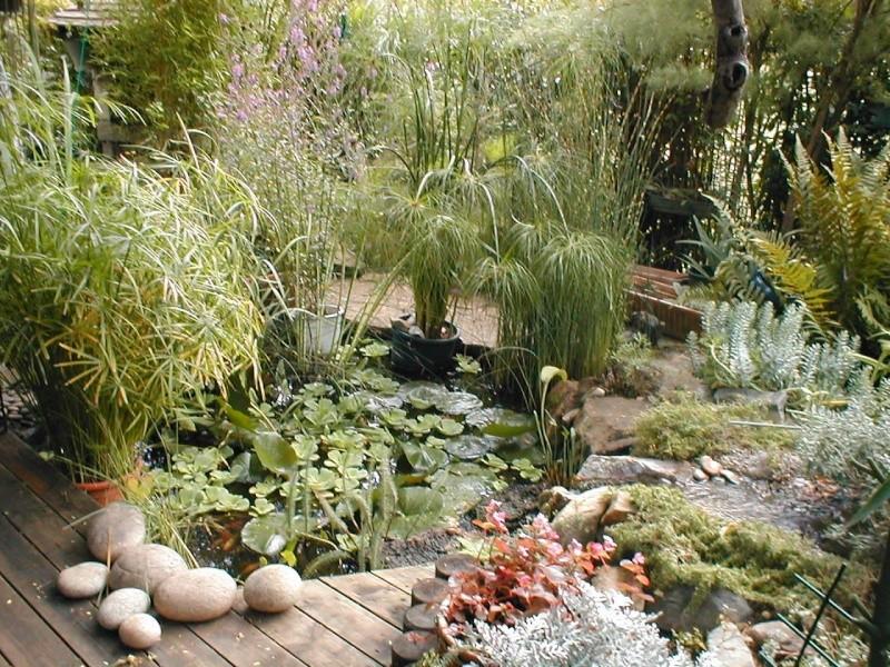 concours bassin de jardin décembre 15_09_10