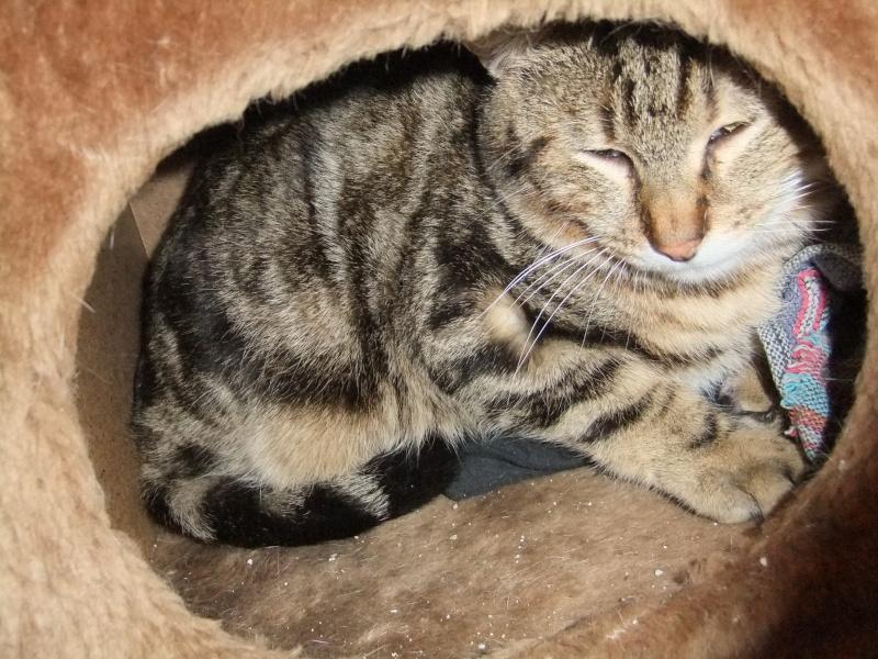 frezbee grand chaton Dscf7910
