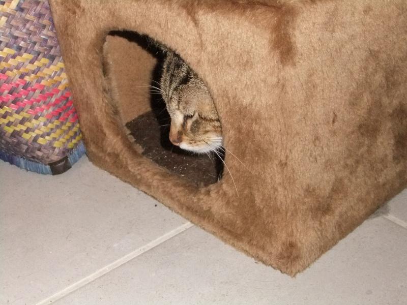 frezbee grand chaton Dscf7911