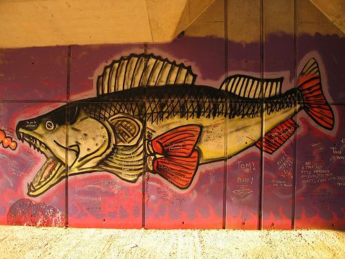 La pêche du carnassier en Ile-de-France