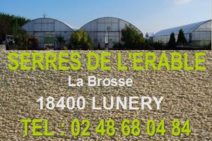 LUNERY (Cher) - LES SERRES DE L'ERABLE - Plants de fleurs, légumes. Producteur de fraises Lunery10