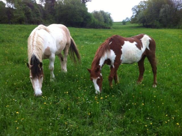 WALANIE (VANILLE) - ONC poney - adoptée en avril 2011 par voulk  - Page 5 42208910