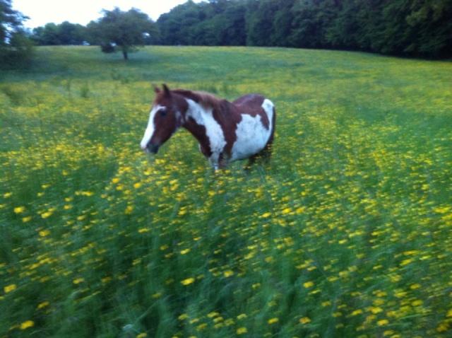 WALANIE (VANILLE) - ONC poney - adoptée en avril 2011 par voulk  - Page 5 43189510