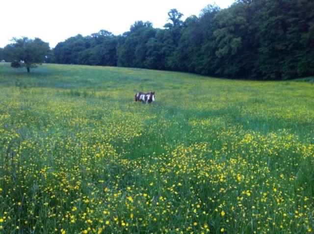 WALANIE (VANILLE) - ONC poney - adoptée en avril 2011 par voulk  - Page 5 94346610