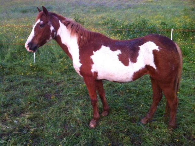 WALANIE (VANILLE) - ONC poney - adoptée en avril 2011 par voulk  - Page 5 97227110