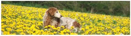 """Concours photo """"L'irish cob dans les fleurs"""" Signat11"""