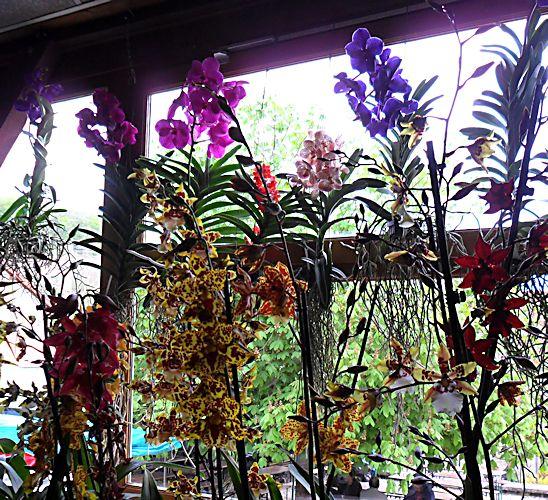 22e journée des plantes à Bergères (10) le 9 mai 2013 (Ascension) Berger13