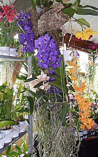 22e journée des plantes à Bergères (10) le 9 mai 2013 (Ascension) Berger14