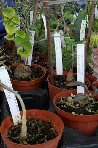 22e journée des plantes à Bergères (10) le 9 mai 2013 (Ascension) Berger16
