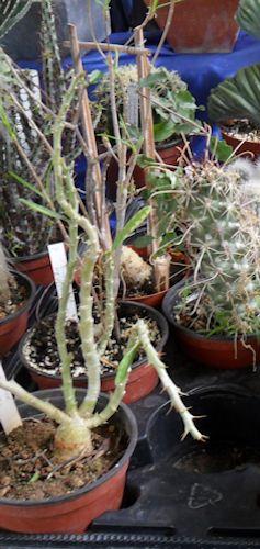 22e journée des plantes à Bergères (10) le 9 mai 2013 (Ascension) Berger18