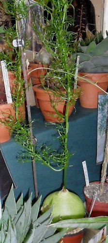 22e journée des plantes à Bergères (10) le 9 mai 2013 (Ascension) Berger19