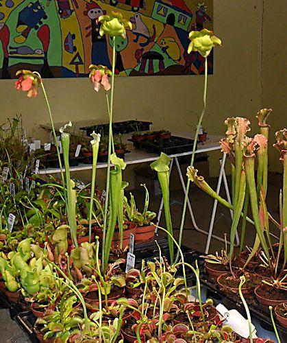 19e Foire aux plantes rares à Bézouotte (21) les 11 & 12 mai 2013 Bezouo12
