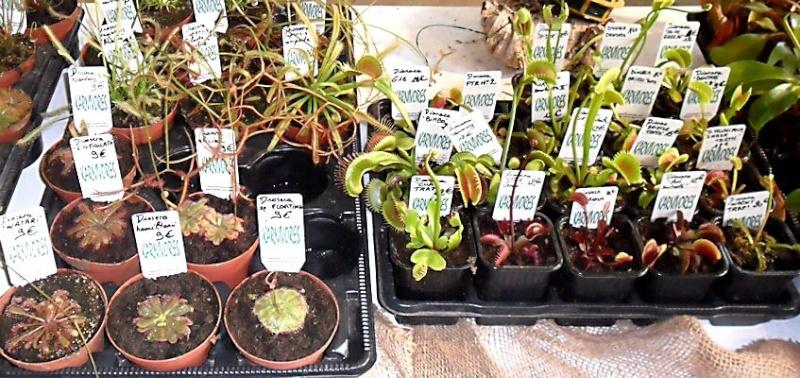 19e Foire aux plantes rares à Bézouotte (21) les 11 & 12 mai 2013 Bezouo15
