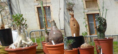 19e Foire aux plantes rares à Bézouotte (21) les 11 & 12 mai 2013 Bezouo18