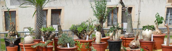 19e Foire aux plantes rares à Bézouotte (21) les 11 & 12 mai 2013 Bezouo19