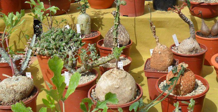 19e Foire aux plantes rares à Bézouotte (21) les 11 & 12 mai 2013 Bezouo21