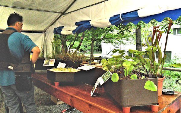 Bourse aux plantes carnivores IV 2013 - Page 2 Expo_b10